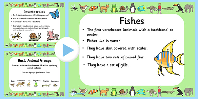 Animal Groups Quiz PowerPoint - animals, animal groups, powerpoint, information powerpoint, quiz, animals quiz, quiz powerpoint, classroom quiz, games