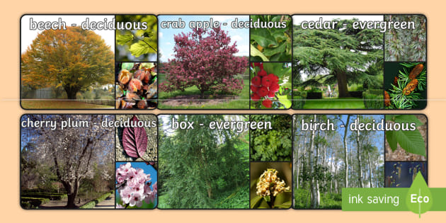 Deciduous and Evergreen Trees Display Photos - deciduous, trees