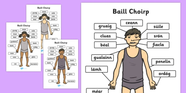 Baill Choirp A4 Gaeilge - gaeilge, parts, body, a4, parts of the body, body parts
