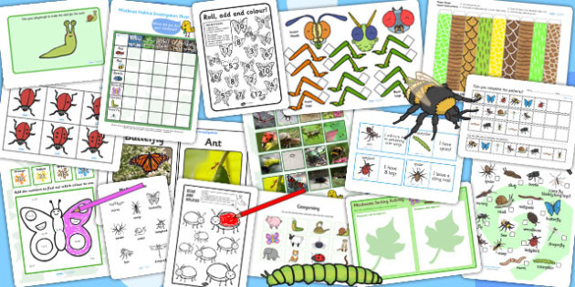 KS1 Minibeast Activity Pack - science, mini beasts, animals, game