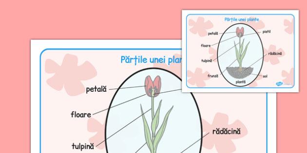 Partile unei plante, Plansa - primavara, plante, romana