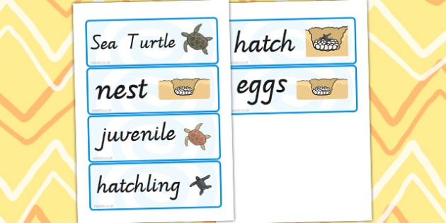 Sea Turtle Life Cycle Word Cards - life cycles, visual aids