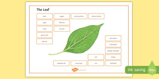 Leaf Word Mat