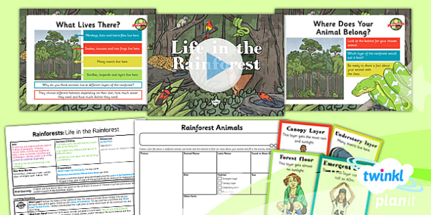 PlanIt - Geography Year 3 - Rainforests Lesson 4: Life in the Rainforest Lesson Pack - geography, rainforest, tropical, jungle, biome, animal, habitat, layer