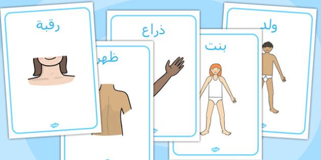 ملصقات عرض أجزاء الجسم - أجزاء الجسم، الجسم