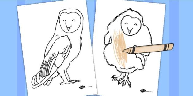 Owl Colouring Sheets - owl, colouring sheets, colouring, sheets