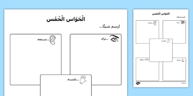 The Five Senses Drawing Activity Sheet Arabic - arabic, Ourselves, me, myself, senses, 5, five, hear, hearing, see, sight, touch, feeling, taste, tasting, smell, smelling, scent, eyfs, early years, ks1, science, my body, all about me, worksheet
