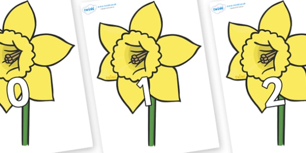 Numbers 0-31 on Daffodils - 0-31, foundation stage numeracy, Number recognition, Number flashcards, counting, number frieze, Display numbers, number posters