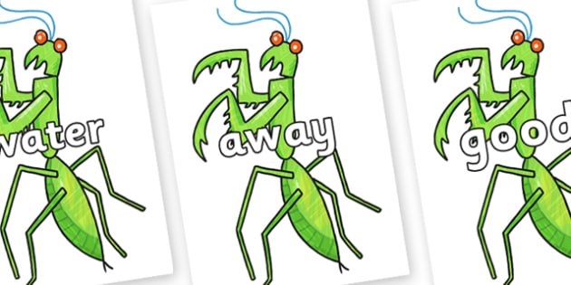 Next 200 Common Words on Praying Mantis to Support Teaching on The Bad Tempered Ladybird - Next 200 Common Words on  - DfES Letters and Sounds, Letters and Sounds, Letters and sounds words, Common words, 200 common words