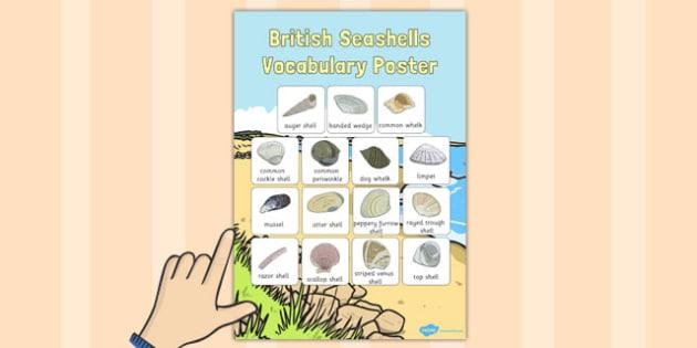 British Seashell Vocabulary Poster - british seashell, vocabulary