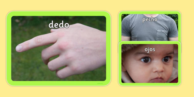 Parts of the Body Photo Pack Spanish - spanish, pictures, images, information, visual aid, group, science, nature, people, legs, arms, head, photographs, ks1, ks2