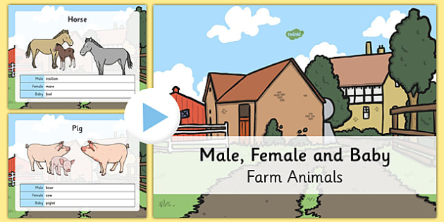 Male and Female Farm Animals and their Young PowerPoint - farm powerpoint, on the farm, male and female animals, animals and their young, farm animals