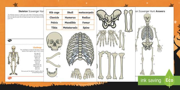 Skeleton Scavenger Hunt Activity Pack
