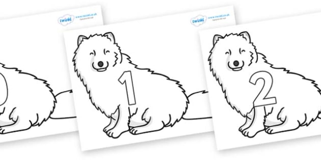 Numbers 0-100 on Arctic Foxes - 0-100, foundation stage numeracy, Number recognition, Number flashcards, counting, number frieze, Display numbers, number posters