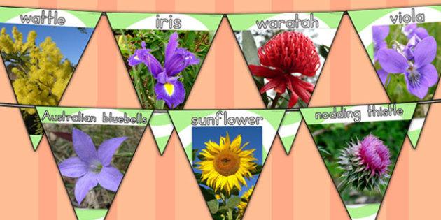 Flowers Photo Display Bunting - displays, photos, flower, visual