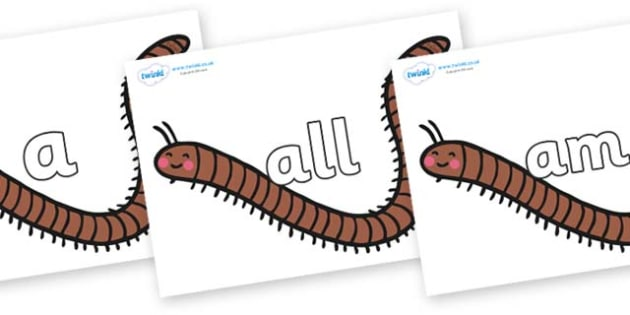 Foundation Stage 2 Keywords on Millipedes - FS2, CLL, keywords, Communication language and literacy,  Display, Key words, high frequency words, foundation stage literacy, DfES Letters and Sounds, Letters and Sounds, spelling