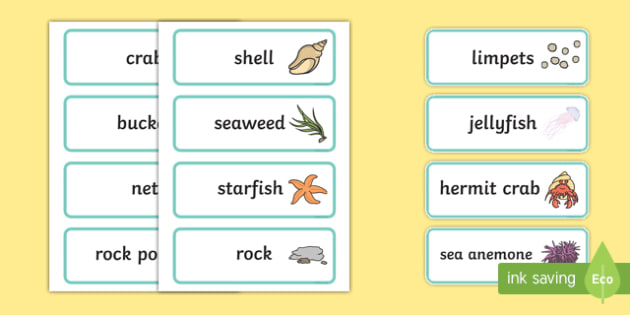 Seaside Rock Pool Word Cards - seaside, rockpool, word cards, cards