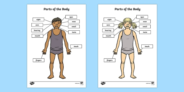 Parts of the Body Senses Labelling Activity Sheet - body, ourselves