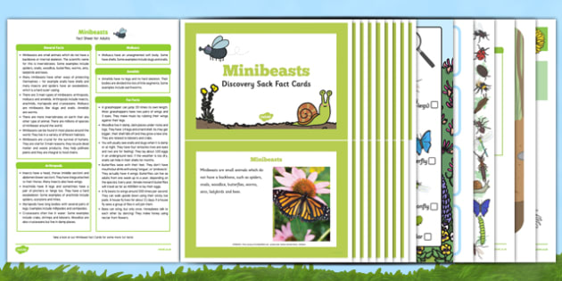 Minibeasts Discovery Sack - EYFS, Early Years, discover, explore, topic box, insects