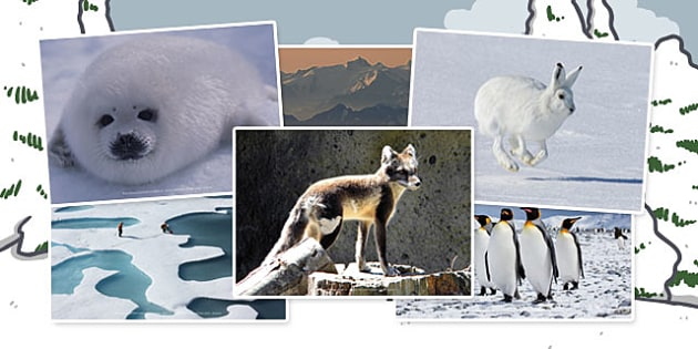 Polar Regions Photo Clip Art Pack - Photos, Displays, Display, Visual