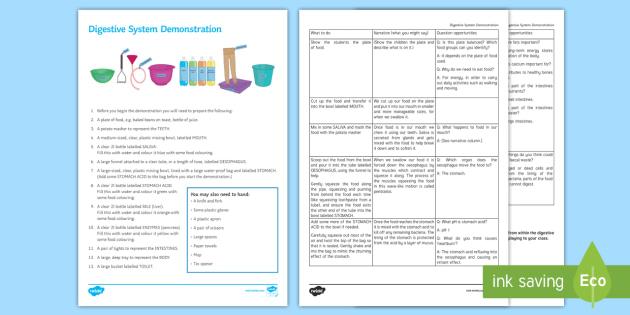 Digestive System Model Investigation Instruction Sheet Print-Out - Investigation Help Sheet, science practical, method, instructions, demonstration, demo, digestive sy