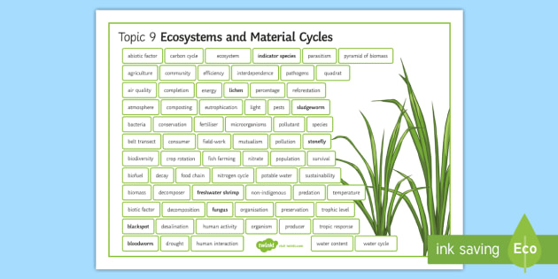 Edexcel Biology Ecosystems and Material Cycles Differentiated Word Mat - Word Mat, edexcel, gcse, nitrogen cycle, material cycle, carbon cycle, water cycle, atmosphere, ecos