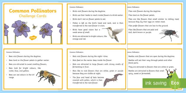 Common Pollinators Fact Cards - pollination, pollinators, bees, flower pollination, plant pollination, pollen, pollinating, animals