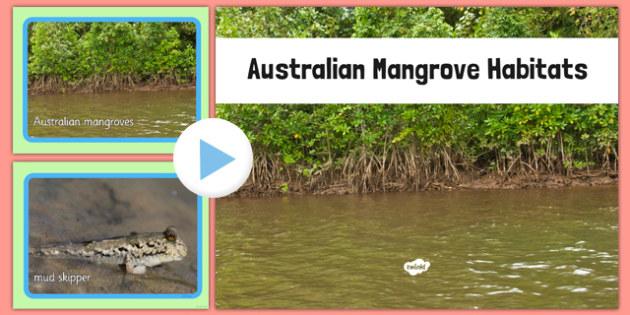 Australian Mangrove Habitat Photo PowerPoint - australia, Science, Habitats, Australian Curriculum, Mangroves, Living, Living Adventure, Good to Grow, Ready Set Grow, Life on Earth, Environment, Living Things, Animals, Plants, Photos, Photographs, Po