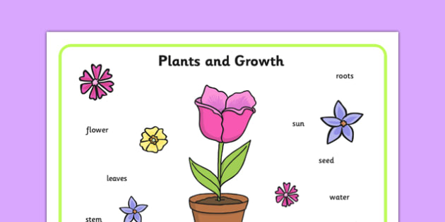 Plant Growth Word Mat - Plant, Growth, Word Mat, Topic, Foundation stage, knowledge and understanding of the world, investigation, living things