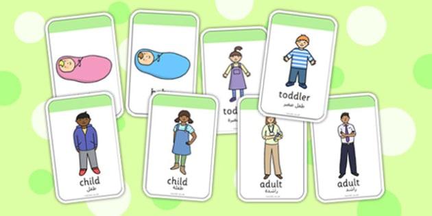Stages of Growth Flash Cards Arabic Translation - arabic, growth, flashcards