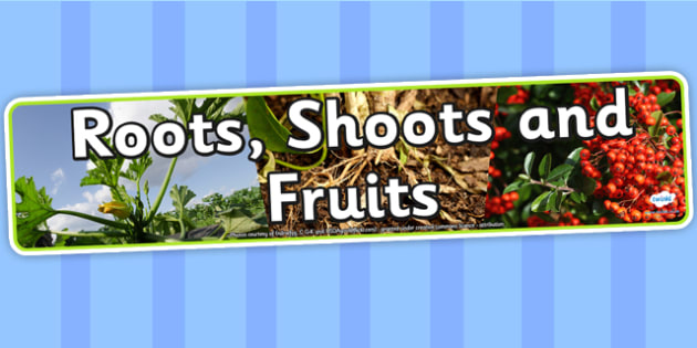Roots Shoots and Fruits Photo Display Banner - roots, shoots