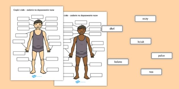 Dopasowanie nazw Części ciała po polsku - przyroda, biologia