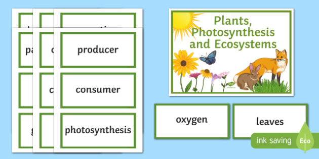 Plants, Photosynthesis and Ecosystems Word Wall