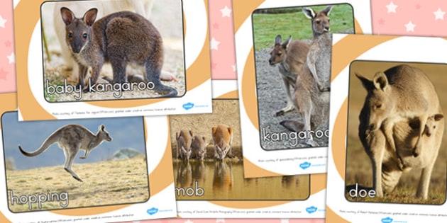 Kangaroo Life Cycle Photo Pack - lifecycles, life cycles, display