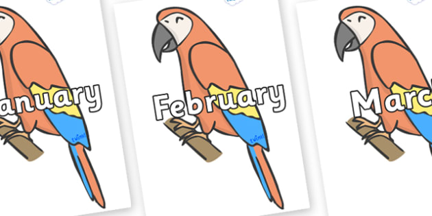 Months of the Year on Parrots - Months of the Year, Months poster, Months display, display, poster, frieze, Months, month, January, February, March, April, May, June, July, August, September
