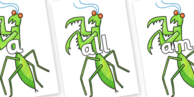 Foundation Stage 2 Keywords on Praying Mantis to Support Teaching on The Bad Tempered Ladybird - FS2, CLL, keywords, Communication language and literacy,  Display, Key words, high frequency words, foundation stage literacy, DfES Letters and Sounds, L