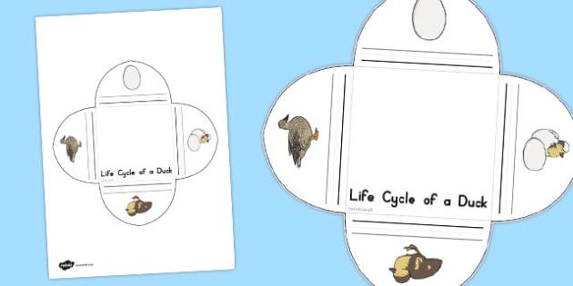 Duck Life Cycle Interactive Visual Aid - australia, life cycle