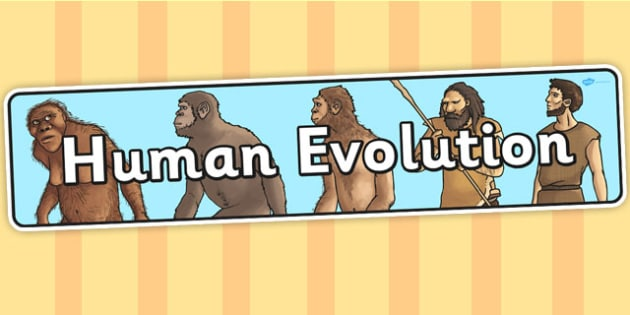 Human Evolution Display Banner - display banner, evolution, human