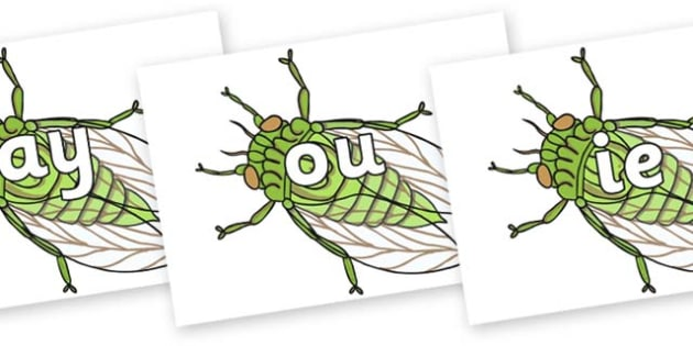 Phase 5 Phonemes on Cicada - Phonemes, phoneme, Phase 5, Phase five, Foundation, Literacy, Letters and Sounds, DfES, display