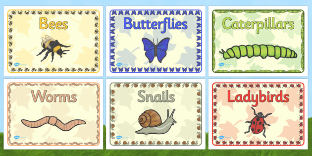 Editable Class Group Signs (Minibeasts) - Minibeasts, group signs, group labels, group table signs, table sign, teaching groups, class group, class groups, table label
