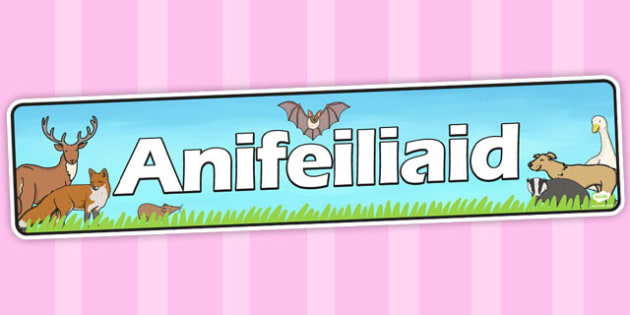 Baner 'Anifeiliaid' - welsh, animals, display, banner