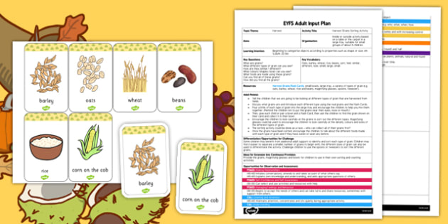 Sorting Harvest Grains EYFS Adult Input Plan and Resource Pack - harvest