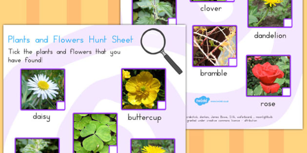 Plants and Flowers Hunt Sheet - Australia, Plants, Flowers