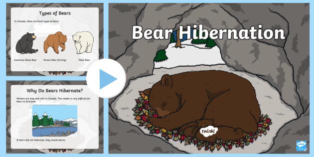 Primary Bear Hibernation PowerPoint - Great Canadian Animals, canada, animal, bear, hibernation, winter, hibernate, hibernating, grizzly b