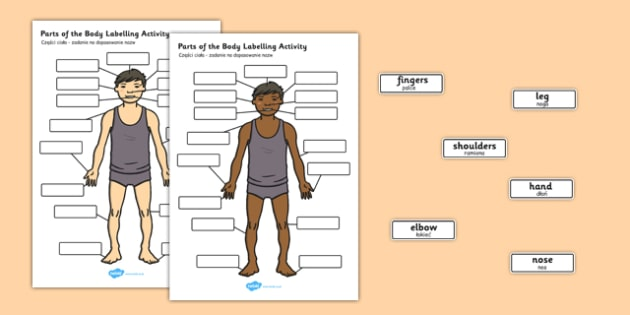 Body Parts Labelling Activity Polish Translation - polish, body parts, labelling, activity, body