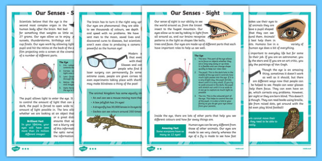 Sense of Sight Differentiated Reading Comprehension Activity