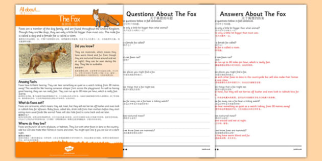 Fox Reading Comprehension Mandarin Chinese Translation - mandarin chinese, Reading comprehension, fox, find, locate, read, comprehend, fact, title, fact file, information, question