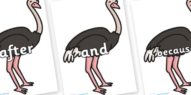 Connectives on Ostriches - Connectives, VCOP, connective resources, connectives display words, connective displays