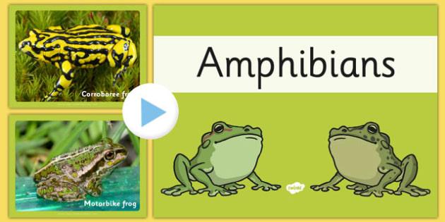 Australian Amphibians PowerPoint - australia, amphibians, powerpoint, animals