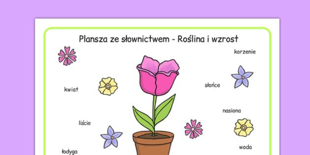 Plansza ze słownictwem Rośliny i wzrost po polsku - przyroda